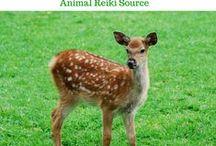 Animals Love Reiki