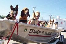 Search-, Rescue- and Therapydogs