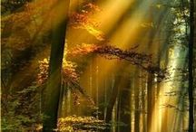 Golden Rays of Sunlight