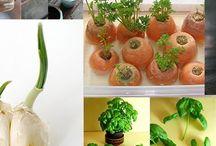 Horta e plantas