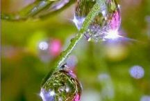 Raindrops and Dewdrops
