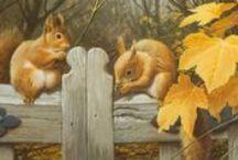 Fox Squirrels / by Judydan Krupski