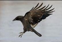 Crow Tattoo Ideas