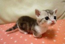 All Things Adorable - Animals