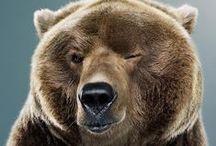 #02 - bears / Bears, bears everywhere!