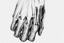 #06 - anatomy