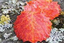 Autumn garden ideas / Autumn decoration ideas and sparkling colors in nature and garden make autumn the best season.