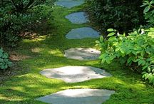 Woodland Garden / Beautiful plants and design for the garden's enchanting shadow.