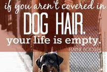 Great Pet Quotes