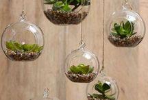 Terraria ❤️ / Little terrariums everyone can enjoy, or make themself!