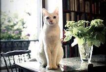 •• PARISIAN CATS ••