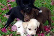 PSY , VLCI, LISKY A ... ostatné štvornohé tvory / o psoch