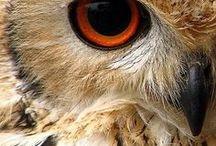 Chouettes & hiboux l Owl