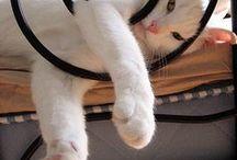 Cat l Chat