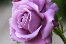 ROSES / o kvetoch