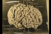 brain science / neurology, neuroscience, and really cool things about our brains