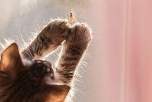 Cats and … / by Midori Hisashige
