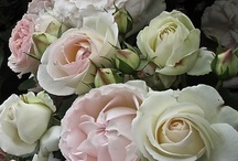 вeαυту ιη вℓσσм / Floral Delights, Gorgeous Bouquets, Nature at is most beautiful