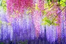 cձรcձժﻨռց ձռժ clﻨოъﻨռց / Breathtaking cascading and climbing plants and flowers.