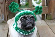 Pets Celebrating St. Patty's Day! / Pets Celebrating St. Patrick's Day!