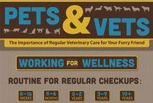 Pet Health / Summary of Pet Health infographics
