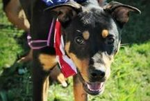 Available Dogs / Dogs and puppies who are looking for their forever homes