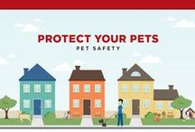 March is Poison Awareness Month / There are many poisonous household items that threaten your pet. Help keep your pet protected!