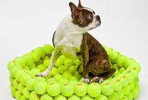 Dog Beds!! / Awesome dog beds that will add that little something extra to your home decor!