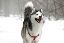 Dogs in the Snow! / Dogs who are having so much fun in the snow!