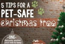 Pet Holiday Safety / How to Keep Your Pets Safe this Holiday Season