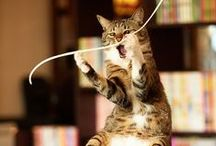 Great Cat Photography / Great Cat Photography that I have found on Pinterest
