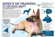 Dog Training / Dog Training