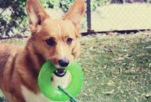 Dog Toys / Dog Toys