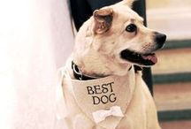 Pets & Weddings / Many people like to make their pet a part of their wedding. Here is some inspiration.