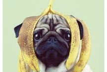 Pugs / We love cute little pugs in every color and in every situation!
