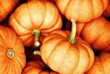 Pumpkins / Pumpkin season is one of our favourite seasons!