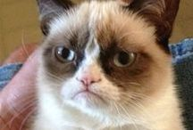 Grumpy Cat <3 / The best cat ever