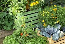 The Constant Gardener / Container Gardening / by Distinctively Hooked