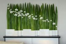 White and green / Floral arrangements and decorations in white and green