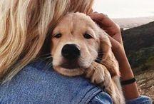 • Doggies •