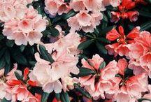 • Flowerrssss •
