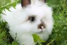 Cute Bunny photos/ memes