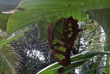 Nature in Sayulita