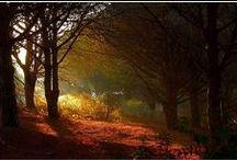 Magic Forest / un encuentro con el alma!!!