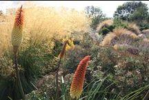 Inspirational Garden and Landscape Design