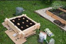 Mini ogrody warzywne i ziołowe / Mini ogrody o przeznaczeniu użytkowym.