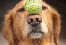 Everyone needs a puppy break! / No description necessary.