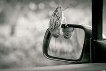 _photography
