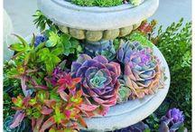 Succulents / Jardinage