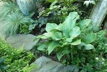 Garden Inspirations / Nature's Beauty and with a little hard work and a lotta luck my garden can be this pretty too :)